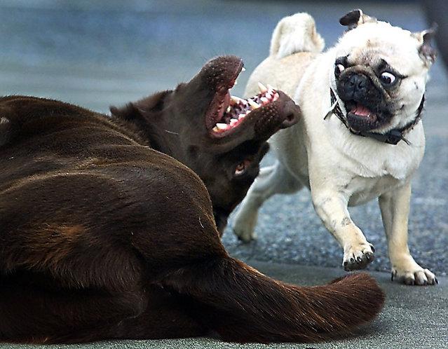 """""""Rosie & Buster Brown"""". (Photo by Darren Stone)"""