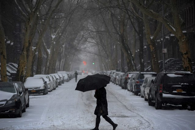 A woman walks beneath an umbrella in falling snow in the Fort Greene section of downtown Brooklyn in New York City January 26, 2015. (Photo by Stephanie Keith/Reuters)