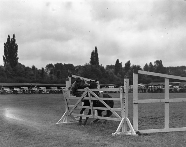 J. Nesfield is tangled in a four-bar gate after his pony 'Sweet William' refused the jump, 9th September 1938. They were competing in the juvenile section at the British Show Jumping Association's first members' show at Maidenhead, Berkshire. (Photo by Fred Morley/Fox Photos/Getty Images)