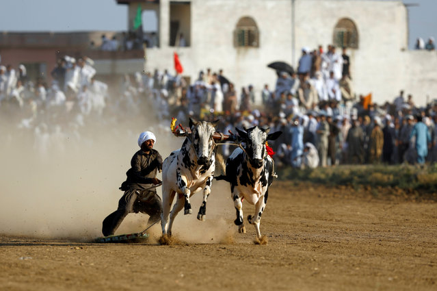 A bull savar (jockey) guides his bulls as he competes in a bull race on the outskirts of Islamabad, Pakistan July 1, 2018. (Photo by Faisal Mahmood/Reuters)