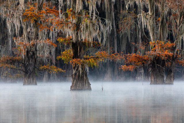 Bald cypress, East Texas, USA. Gold prize in plants and fungi. (Photo by Doron Talmi/World Nature Photography Awards)