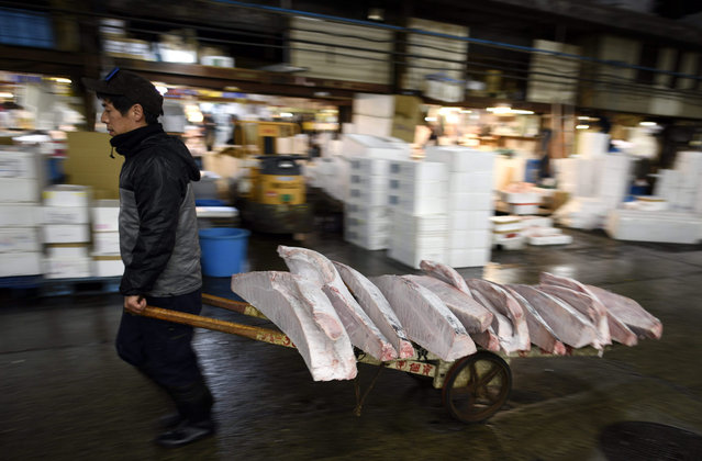 A worker carries cut frozen tuna in half at the Tsukiji fish market in Tokyo, Japan, 05 January 2016. The 80-year-old Tsukiji market is scheduled to be replaced by a new one opening in Tokyo's Toyosu area in November. (Photo by Franck Robichon/EPA)