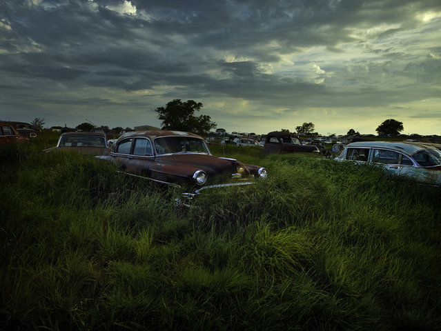 Grass grows tall around the abandoned motors, 2014, Oklahoma. (Photo by Dieter Klein/Barcroft Media)