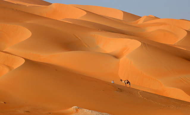 A man walks with his camel across the Liwa desert, some 250 kilometres west of the Gulf emirate of Abu Dhabi, during the Liwa 2017 Moreeb Dune Festival on January 2, 2017.  The festival, which attracts participants from around the Gulf region, includes a variety of races (cars, bikes, falcons, camels and horses) or other activities aimed at promoting the country's folklore. (Photo by Karim Sahib/AFP Photo)