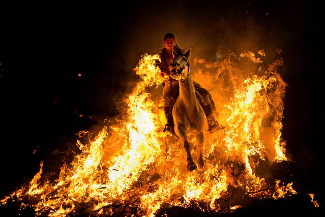 "A man rides a horse through a bonfire as part of a ritual in honor of Saint Anthony, the patron saint of animals, in San Bartolome de Pinares, about 100 km west of Madrid, Spain on Thursday, January 16, 2014. On the eve of Saint Anthony's Day, hundreds ride their horses through the narrow cobblestone streets of the small village of San Bartolome during the ""Luminarias"", a tradition that dates back 500 years and is meant to purify the animals with the smoke of the bonfires and protect them for the year to come. (Photo by Emilio Morenatti/AP Photo)"