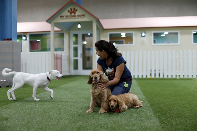 Co-founder Preeti Sharma plays with the dogs at an indoor park at My Second Home, a newly opened luxury pet resort and spa, in Dubai, April 24, 2015. (Photo by Ahmed Jadallah/Reuters)