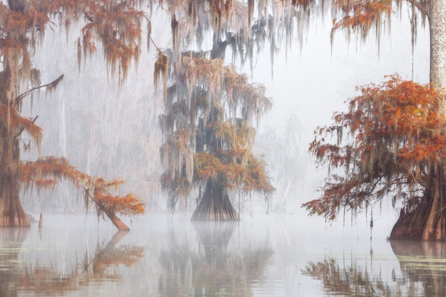 """First Place, Trees, Woods and Forests. """"The Louisiana wetlands are a giant tangle of canals, swamps and forests of palm and cypress treesthat encompass the great Mississippi estuary. Populated by numerous snakes, alligators, birds andvenomous spiders, the often-hostile environment is capable of stunning beauty"""". (Photo by Roberto Marchegiani/The Guardian)"""