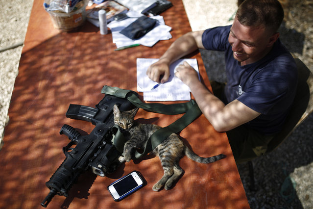 An Israeli soldier looks at a cat lying next to his weapon near the border with the Gaza Strip August 10, 2014. (Photo by Amir Cohen/Reuters)