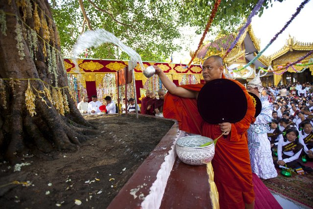 Myanmar Buddhist monk pours water to a Banyan tree during the Full Moon day of Kasone, known as Buddha's Birthday, at Myanmar famous Shwedagon pagoda Saturday, May 2, 2015, in Yangon, Myanmar. (Photo by Khin Maung Win/AP Photo)