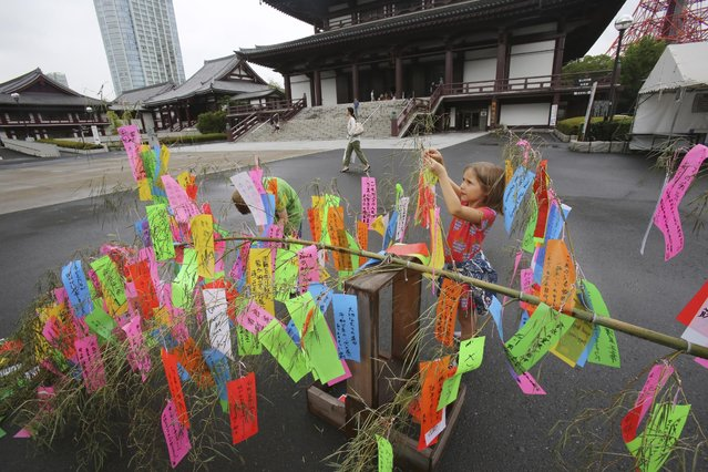 A girl tags colorful strips of paper messages to bamboo branch at Zojoji temple during the celebration of upcoming Tanabata, or Japan's star festival, in Tokyo Saturday, June 27, 2015. According to legend, deities Orihime (Vega) and her lover Hikoboshi (Altair), separated by the Milky Way, are allowed to meet only once a year, July 7.  People in the country celebrate the festival by writing wishes on the strips and hanging them under bamboo trees. (Photo by Koji Sasahara/AP Photo)