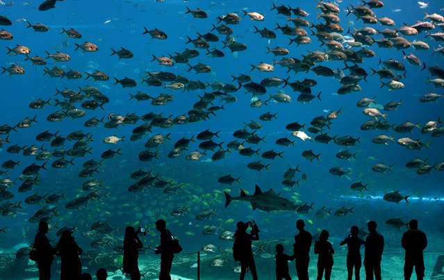 Visitors look at fish in the aquarium inside the Chimelong Ocean Kingdom in Zhuhai on April 29, 2014. The park which claims to be the world's largest ocean theme park was built at an estimated cost of USD 3.3 billion and opened in March of this year. (Photo by Mark Ralston/AFP Photo)