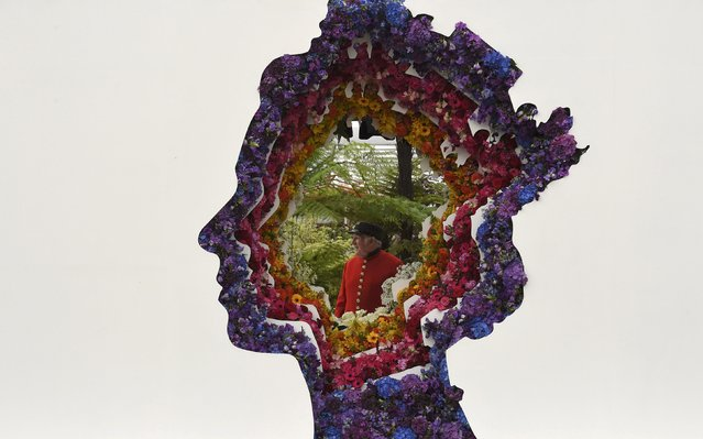 A Chelsea Pensioner poses as he views displays through a floral design of Britain's Queen Elizabeth at the Chelsea Flower Show in London, Britain, May 23, 2016. (Photo by Toby Melville/Reuters)