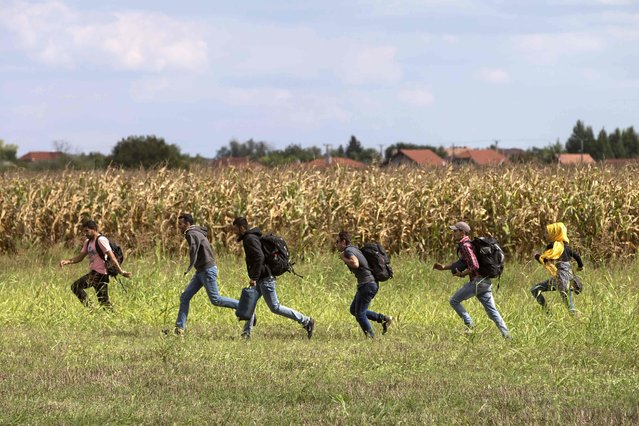 Migrants run from police as they escape from a collection point in Roszke village, Hungary, September 8, 2015. (Photo by Marko Djurica/Reuters)