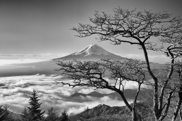 """""""The spirit of the tree"""". November of last year. The lonely tree stared at Mt Fuji floating in the sea of clouds. It seemed that a spirit has dwelled in the tree. I loved this wonderful tree. But! This September, when I visited here, this tree with wonderful branches had been cut with a saw from the roots! (Photo and caption by Takashi/National Geographic Photo Contest)"""