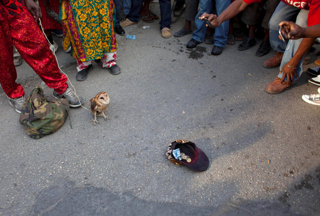 In this January 27, 2013 photo, snake handler Saintilus Resilus' cap lays on the ground for collecting money as he shows off an owl he caught in the wild days before, as his sack of snakes lays at his feet during pre-Lenten Carnival season in Petionville, Haiti. This year, Resilus has new catches to display: an owl that he promises to let go after Carnival. (Photo by Dieu Nalio Chery/AP Photo/Matt Dayhoff)