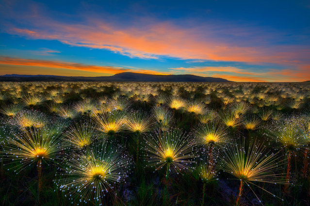 Winner, Wildflower Landscapes category. Alto Paraíso de Goiás, Goiás, Brazil. (Photo by Marcio Cabral/The Guardian)
