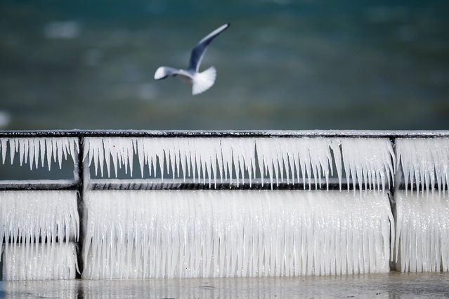 A seagull flies by an ice covered banister on the frozen shore of Lake Geneva during a windy winter day, in Coppet, Switzerland, 26 February 2018. (Photo by  Valentin Flauraud/EPA/EFE)