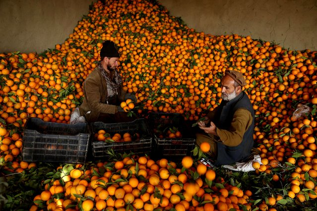 Afghan vendors sort out oranges for sale at a wholesale market in the Bati kot district in Nangarhar province, Afghanistan, 04 December 2020. The orange fruit floods markets across Afghanistan due to bumper crop in the winter season. Oranges are rich in vitamin C, which may reduce severity of the common cold. (Photo by Ghulamullah Habibi/EPA/EFE)