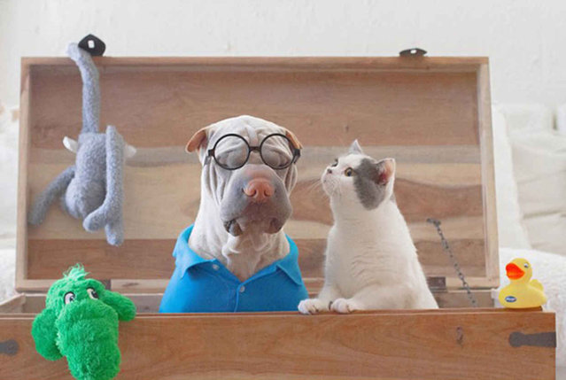 Photogenic Shar Pei And Cat Are The Cutest of Best Friends