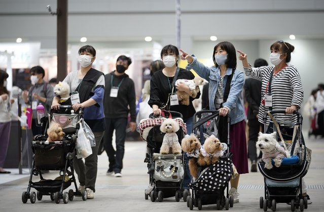 """Visitors walk with their dogs in strollers at the """"Interpets"""" international pet fair in Tokyo, Japan, 01 April 2021. As the coronavirus pandemic is limiting access from abroad, some 300 exhibitors based in Japan will present their products to business visitors and pet lovers until 04 April at the event, which is the largest international trade fair in the Japanese pet market. With the COVID-19 pandemic, pets are giving comfort to people who are spending more time home due to lockdowns and telework, boosting the pet products market. (Photo by Franck Robichon/EPA/EFE)"""