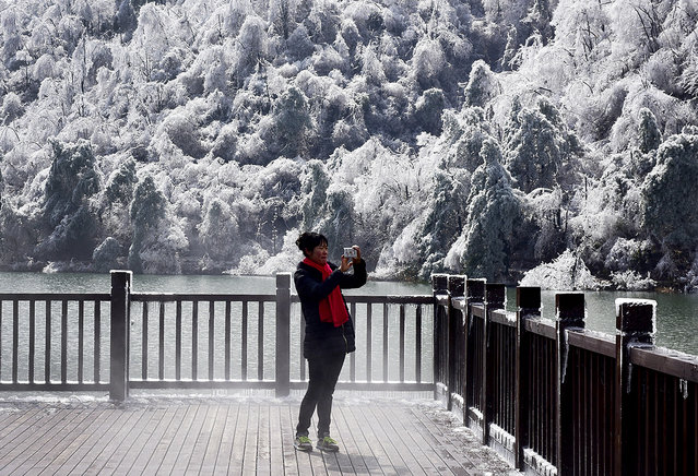 A woman uses a smartphone to take a souvenir photo of the trees covered with ice at a resort in Hangzhou in east China's Zhejiang province, Monday, January 25, 2016. (Photo by Chinatopix via AP Photo)