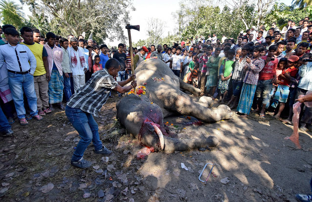 A forest official uses an axe to remove the tusk from a dead elephant after it was hit by a train engine while crossing a railway track at Kampur village in Nagaon district in Assam, India, December 17, 2016. (Photo by Anuwar Hazarika/Reuters)