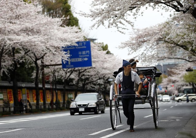 A rickshaw man runs under the blooming cherry blossoms in Tokyo, Sunday, March 29, 2015. (Photo by Shizuo Kambayashi/AP Photo)