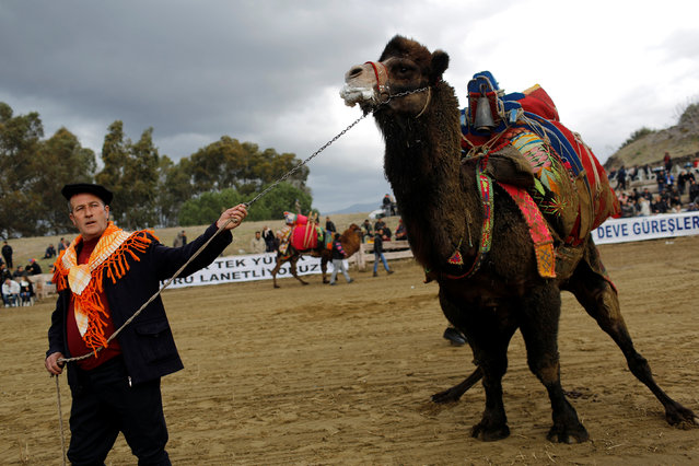 A wrestling camel is escorted by his owner at the Pamucak arena during the annual Selcuk-Efes Camel Wrestling Festival in the Aegean town of Selcuk, near Izmir, Turkey, January 15, 2017. (Photo by Murad Sezer/Reuters)
