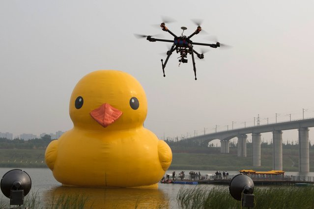 A drone camera hovers near a giant yellow rubber duck created by Dutch artist Florentijn Hofman as an art piece floating in an enclosed branch of Beijing's Yongding river in Beijing, China, Friday, September 6, 2013. (Photo by Ng Han Guan/AP Photo)