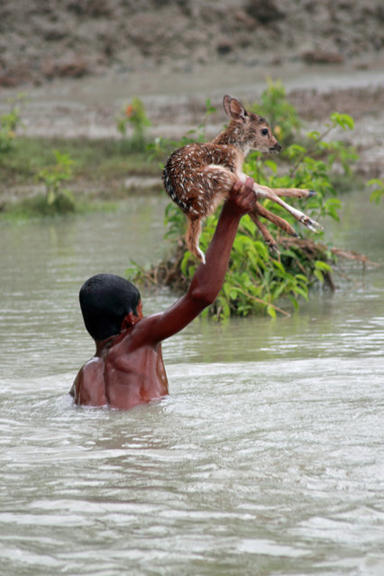 The young boy saved the baby deer from drowning
