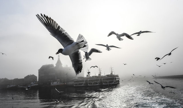 Seagulls fly over the Bosphorus river while traffic has stopped due to the fog on February 28, 2017 in Istanbul, Turkey. (Photo by Bulent Kilic/AFP Photo)