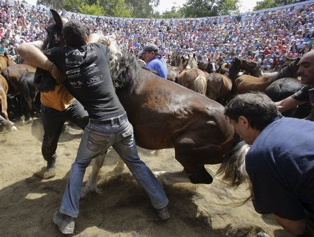 "Revellers try to hold on to a wild horse during the ""Rapa das Bestas"" traditional event in the village of Sabucedo, northwestern Spain, July 5, 2015. (Photo by Miguel Vidal/Reuters)"