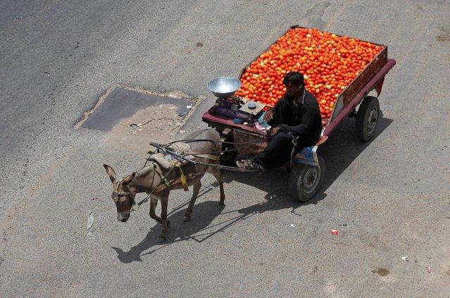 A man rides on donkey cart while selling tomatoes along a road in Karachi, Pakistan, May 25, 2016. (Photo by Akhtar Soomro/Reuters)