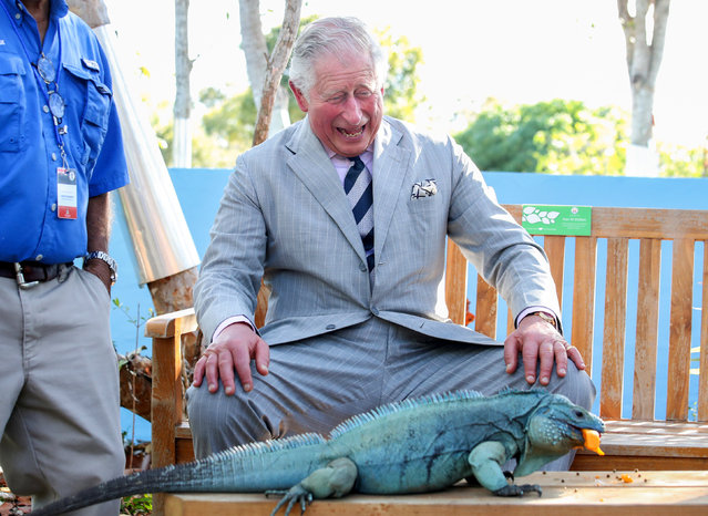 Britain's Prince Charles laughs with Peter, a blue iguana, at the Queen Elizabeth II Royal Botanic Park in Grand Cayman, Cayman Islands, March 28, 2019. (Photo by Chris Jackson/Pool via Reuters)