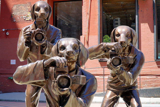 """""""Paparazzi Dogs"""" art installation, New York, NY on June 9, 2016. DUMBO in Brooklyn, NY, is home to many A-list celebrities like Anne Hathaway and her husband. So, it is fitting that a husband and wife artist team have created this art installation right in the heart of this celebrity neighborhood. (Photo by Ken Katz/Startraksphoto.com)"""
