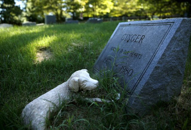 """A dog's headstone for """"Ginger"""" is seen at the Aspin Hill Memorial Park in Aspen Hill, Maryland July 22, 2015. (Photo by Gary Cameron/Reuters)"""