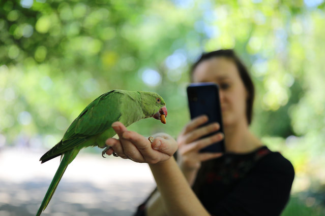 A young woman takes a picture whilst feeding a parakeet from her hand as she enjoys the autumn sunshine in St James's Park London on September 14, 2020, at the start of a week in which the UK is expected to bask in temperatures of more than 30C. (Photo by Aaron Chown/PA Images via Getty Images)