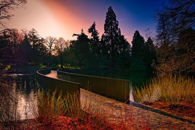 Winner, Captured at Kew category. Royal Botanic Gardens, Kew, London, England. (Photo by Zygmunt Szot/The Guardian)