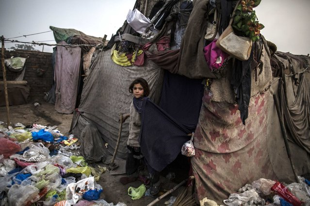 An Afghan refugee girl stands near her parents' makeshift shelter in a slum on the outskirts of Lahore January 12, 2015. (Photo by Zohra Bensemra/Reuters)
