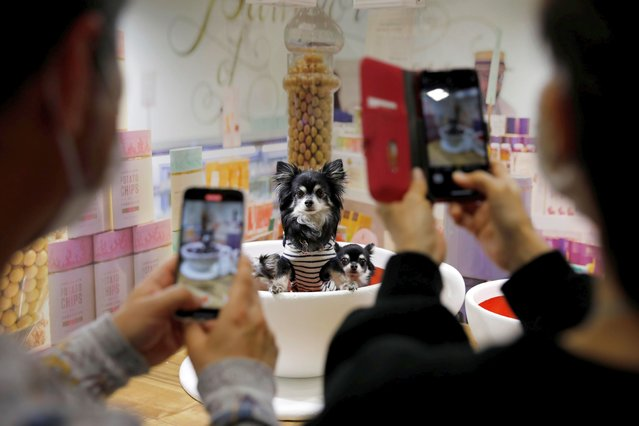 Pet owners take photos of their dogs at Interpets, an international fair for pet related products and services, in Tokyo, Japan, April 1, 2021. (Photo by Kim Kyung-Hoon/Reuters)