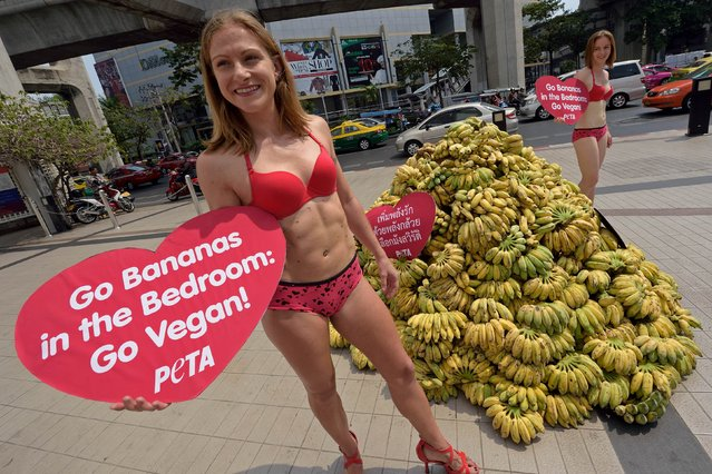 Activists of People for the Ethical Treatment of Animals (PETA) hand out bananas to motorists during a campaign to promote eating bananas for Valentine's day in Bangkok on February 12, 2015. Activists called on people turn to vegetarian saying the cholesterol in meat, eggs and daily products can contribute to hardening of arteries and slow the flow of blood to all the body's vital organs. (Photo by Pornchai Kittiwongsakul/AFP Photo)