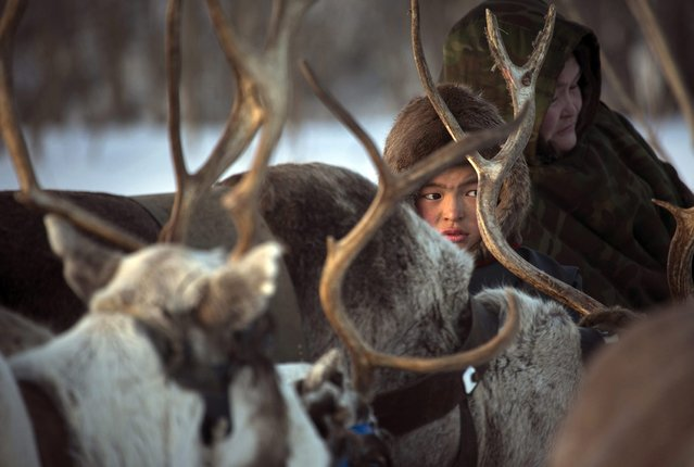 In this photo taken on Saturday, March 14, 2015, a Nenets boy sits on a sleigh as he attends the Reindeer Herder's Day holiday in the city of Nadym, in Yamal-Nenets Region, 2500 kilometers (about 1553 miles) northeast of Moscow, Russia. (Photo by Dmitry Lovetsky/AP Photo)