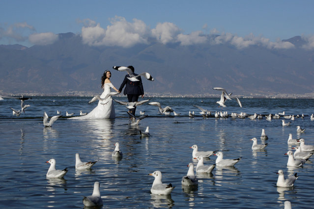 A couple pose for a wedding photo at Erhai lake in Dali, southwest China's Yunnan province on December 28, 2016. (Photo by Jason Lee/Reuters)