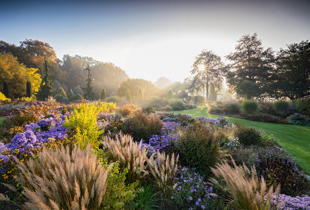 """First place, Beautiful Gardens. """"Glorious early morning sun bathed the Summer Garden at Bressingham in rich, warming light.Ornamental grasses are featured with swathes of aster and rudbeckia"""". (Photo by Richard Bloom/The Guardian)"""
