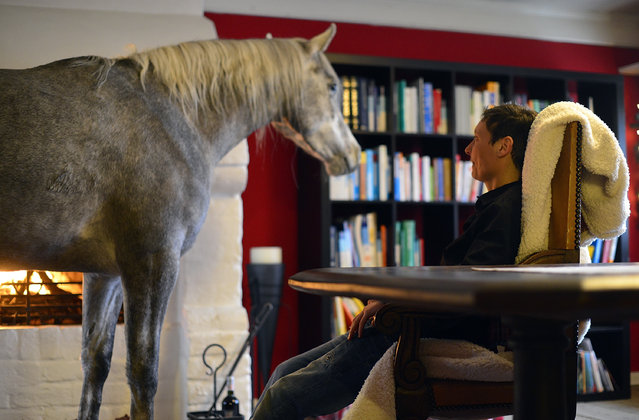 Nasar, an Arabian horse, stands in the living room of doctor Stephanie Arndt at her home on February 19, 2014 in Holt, Germany. (Photo by Patrick Lux/Getty Images)