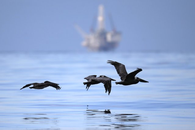Birds fly in front of an oil-drilling platform over an oil slick along the coast of Refugio State Beach in Goleta, California, United States, May 20, 2015. A pipeline ruptured along the scenic California coastline on Tuesday, spilling some 21,000 gallons (79,000 liters) of oil into the ocean and on beaches before it could be secured, a U.S. Coast Guard spokeswoman said. (Photo by Lucy Nicholson/Reuters)