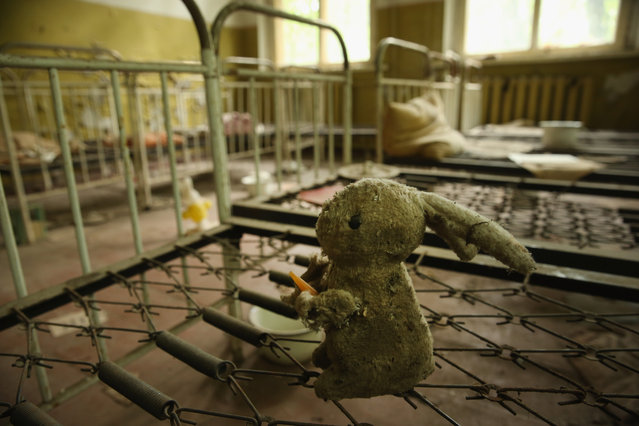 A stuffed rabbit doll sits among children's beds standing in the abandoned kindergarten of Kopachi village located inside the Chernobyl Exclusion Zone on September 29, 2015 near Chornobyl, Ukraine. Kopachi, a village that before 1986 had a population of 1,114, lies only a few kilometers south of the former Chernobyl nuclear power plant, where in 1986 workers inadvertantly caused reactor number four to explode, creating the worst nuclear accident in history. Radiation fallout was so high that authorities bulldozed and buried all of Kopachi's structures except for the kindergarten. (Photo by Sean Gallup/Getty Images)
