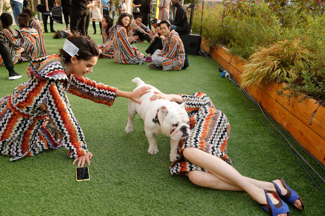 Models play with a dog backstage at the Missoni Spring/Summer 2020 show during the Milan Fashion Week on September 21, 2019 in Milan, Italy. (Photo by Rex Features/Shutterstock)