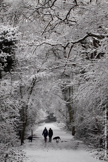 Women walk through the snow on Wimbledon common with their dogs on February