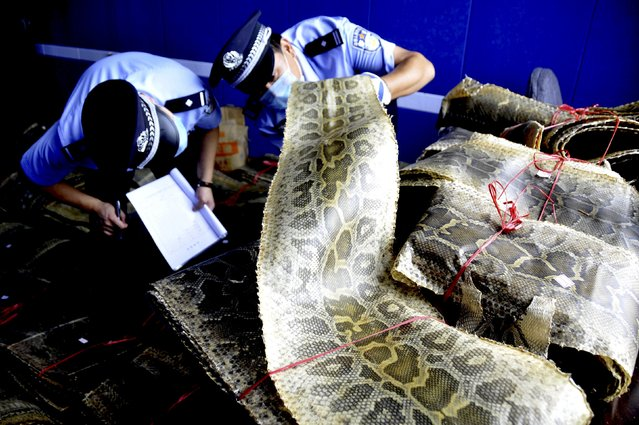 Police officers mark and register bundles of seized python skins in Linyi, Shandong province, China, July 17, 2015. Local police arrested two man suspected of illegal trading of wildlife products and confiscated over 900 pieces of python skins, local media reported. (Photo by Reuters/Stringer)
